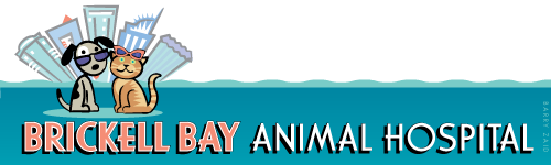 Brickell Bay Animal Hospital